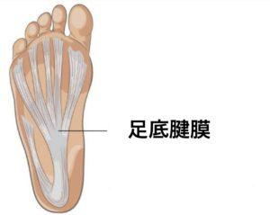 彦根市かがりの整骨院足底腱膜のイラスト